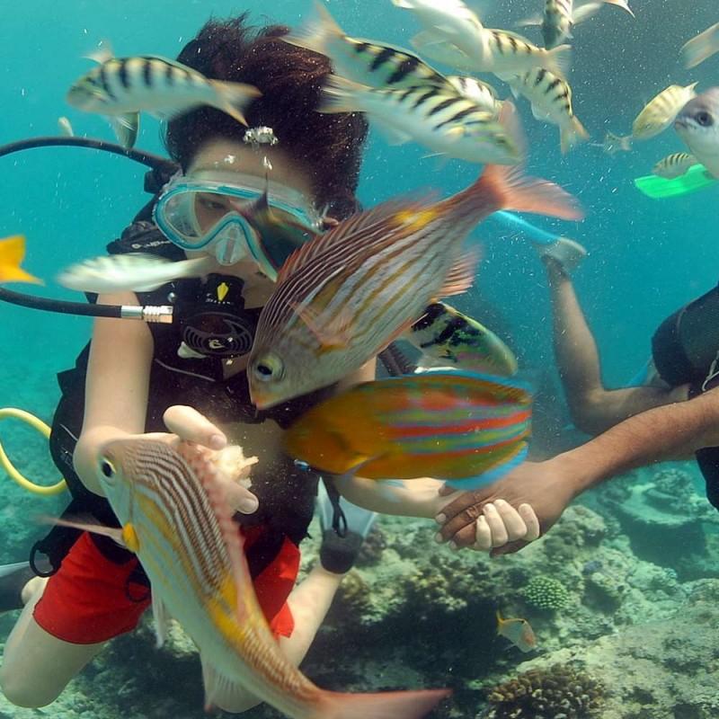 Diving - Belle Mare – Trou d'Eau Douce