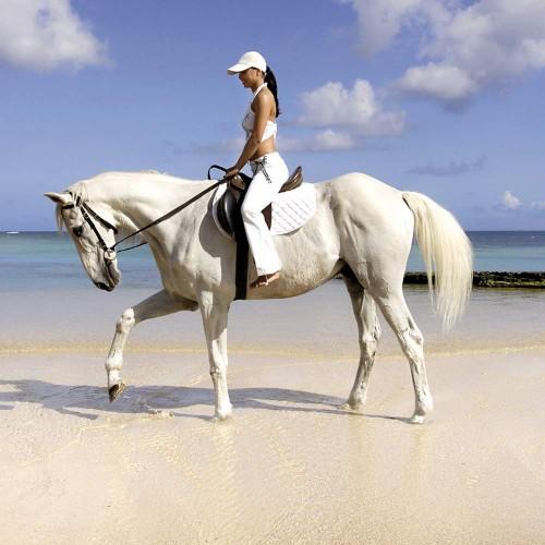 Horse Riding - Balaclava